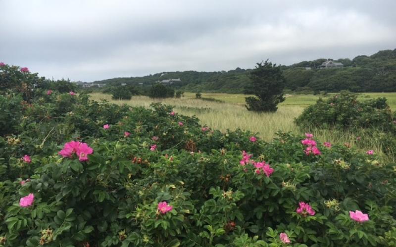Late Summer on Martha's Vineyard