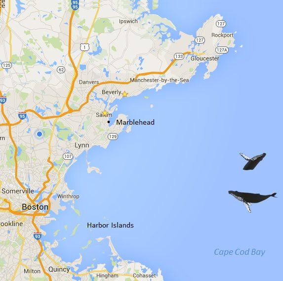 Boston Cruise Map