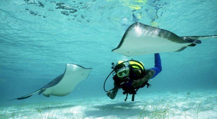 Scuba diving with stingrays in the Bahamas