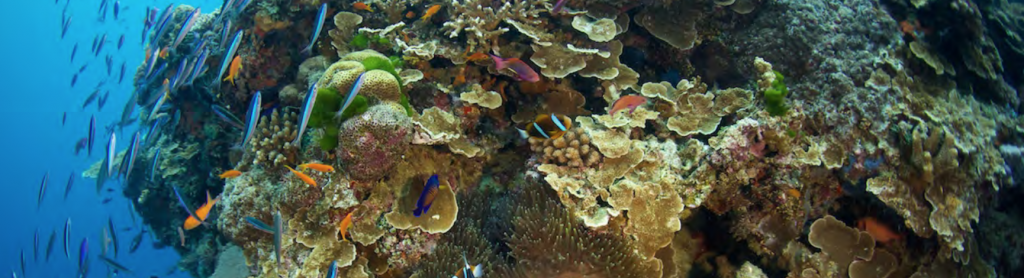 Tropical fish at a colorful reef off the M/Y BELUGA