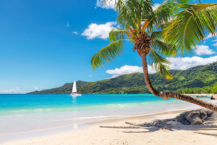 Amazing beach with coconut palm tree and sailing yacht