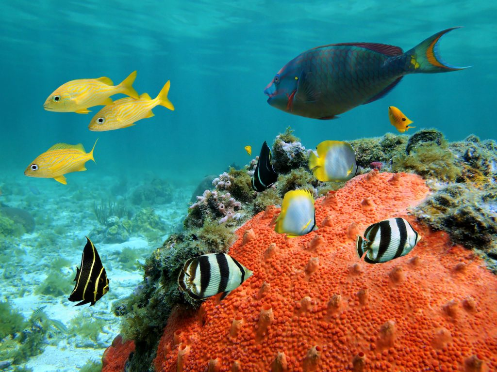 Underwater view in a lagoon with colorful tropical fish and sea sponge