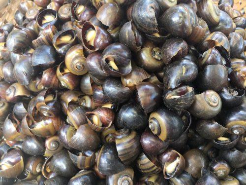 A local delicacy - winkles or fancy sea snails AQUA MEKONG