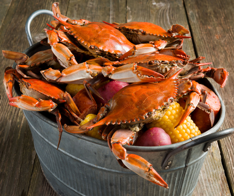 Chesapeake Bay Maryland crabs in a bucket