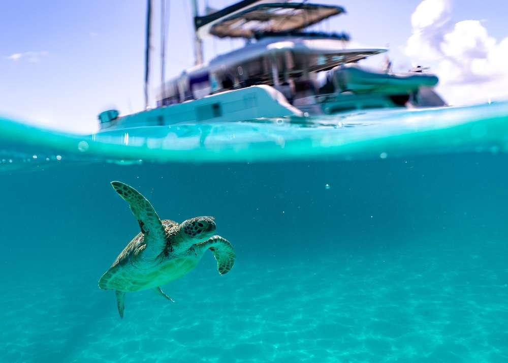 Sea tortoises swimming underwater below S/Y TWIN FLAME in The Caribbean