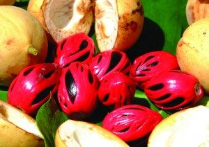 grenada-home-to-spices-including-nutmeg-and-mace