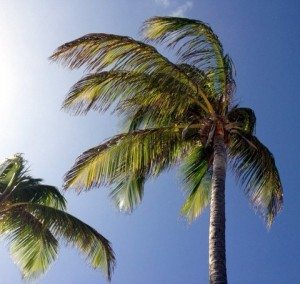 Caribbean Sun_carolkent.com